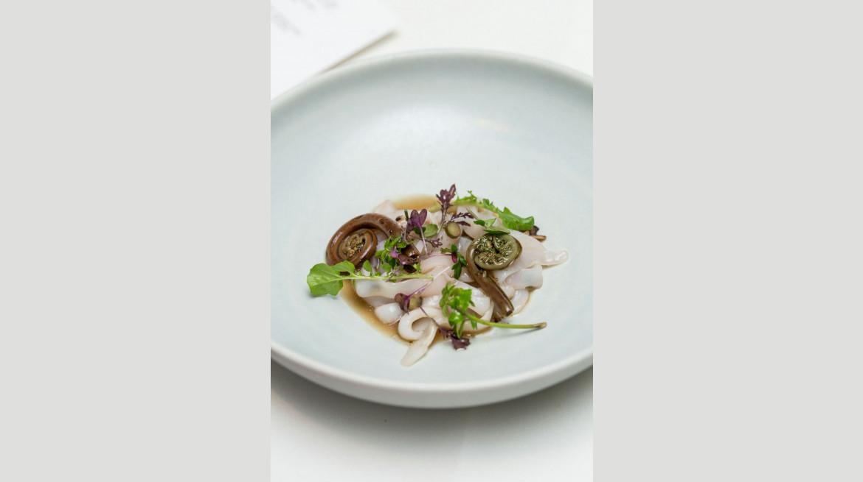 euro squid