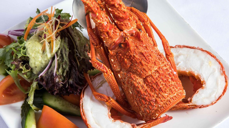 sammys lobster