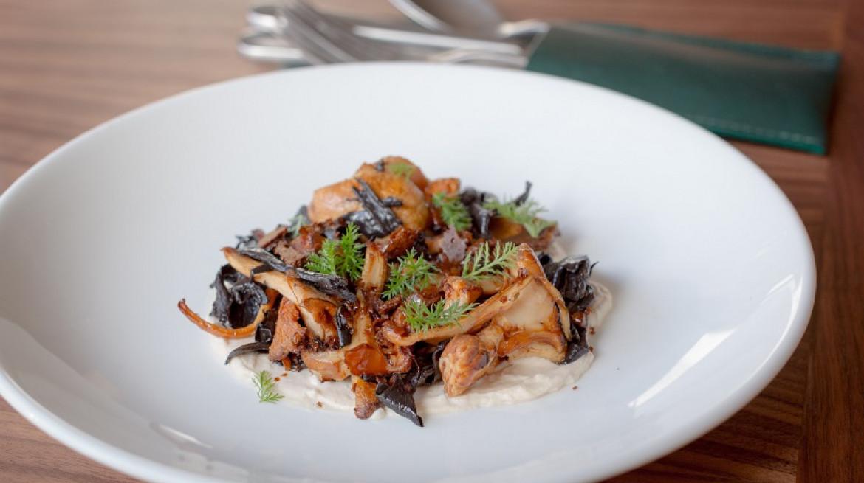 londrino mushrooms2
