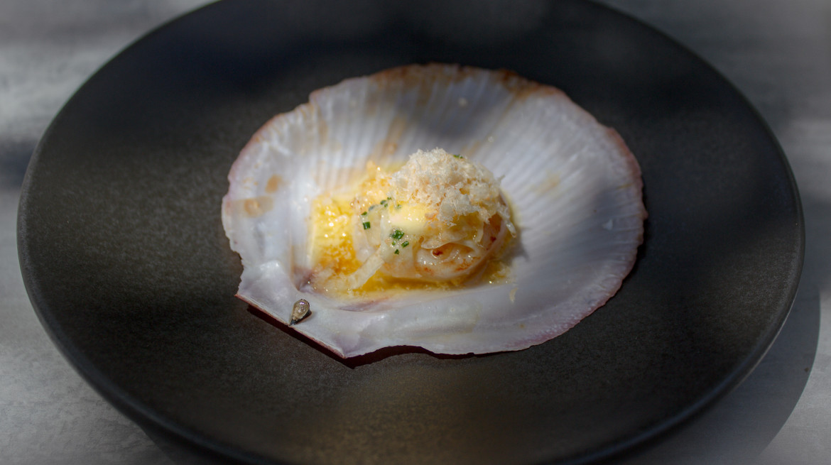 Scallop Feb 2019