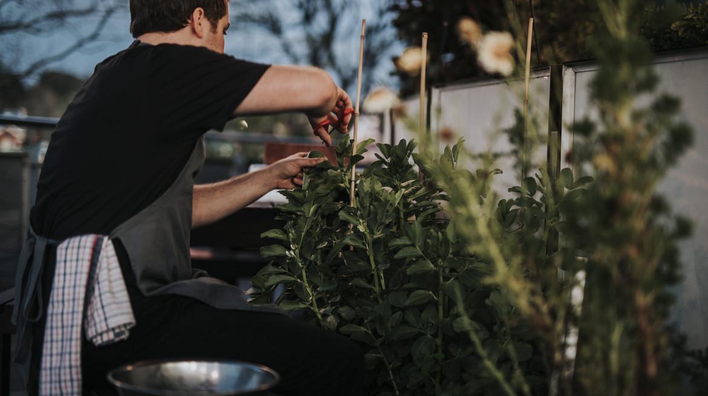 redcabbage 0077cam in herb garden