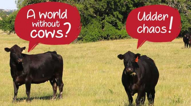 uber eats chaos cows